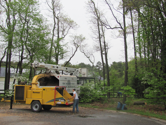 Dead Trees Being Removed